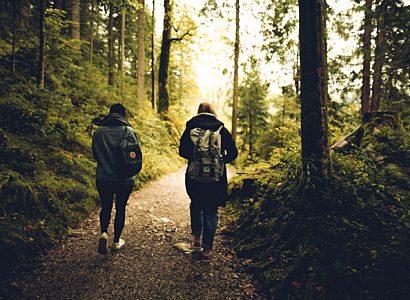 Forest Friends Friendship 591216