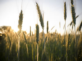 Harvest resources for churches