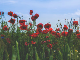 Prayer for Remembrance Day