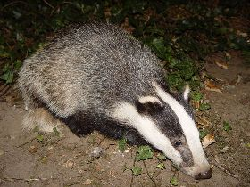 The Weekly WHIP 26 October 2012