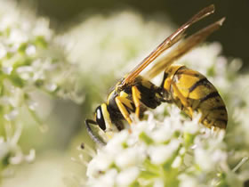 Why did God create wasps?